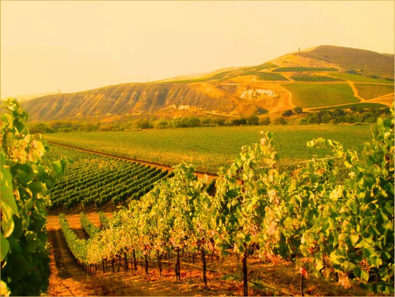Glowing California Wine Country